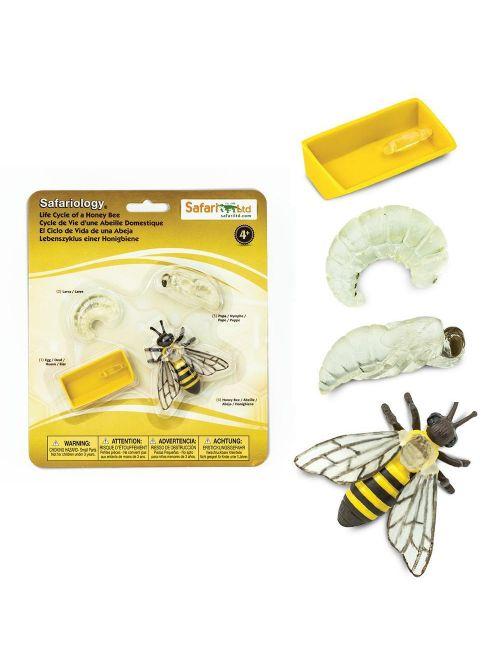 Ciclul vieții la albină - Safari Ltd.